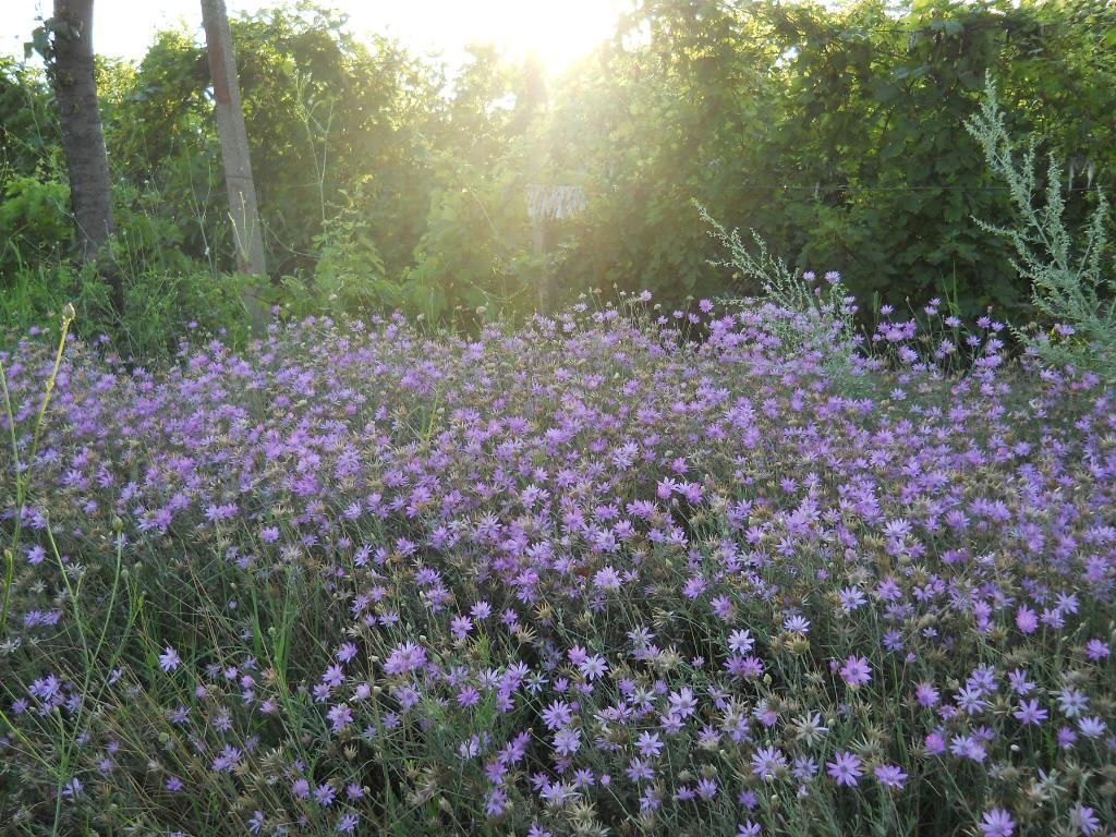 Satul cu flori de suflet